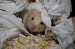 fotos de hamsters monos